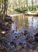 Der Brandbach im Naturschutzgebiet Bustedter Wiesen