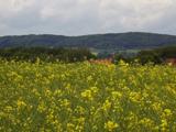 Schweichelner Berg im Frühjahr