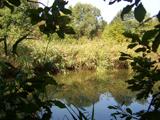 Artenschutzteich in den Bustedter Wiesen