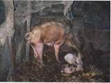 Tierschutzfall
