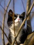 Katzenfoto 1