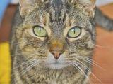 Katzenfoto 2